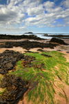 North Berwick Shore